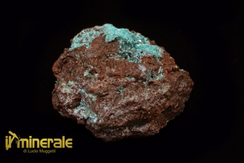 MN1358-1_minerali_collezione_auricalcite_collection_minerals_native_copper.logo